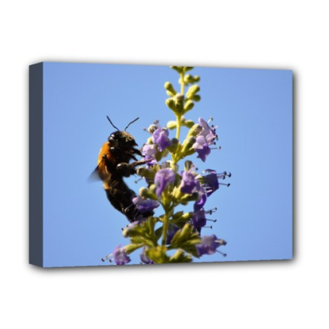 Bumble Bee 1 Deluxe Canvas 16  X 12   by timelessartoncanvas