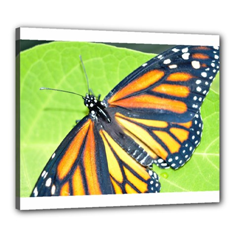 Butterfly 2 Canvas 24  X 20  by timelessartoncanvas