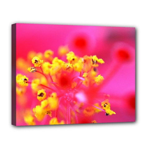 Bright Pink Hibiscus Canvas 14  X 11  by timelessartoncanvas