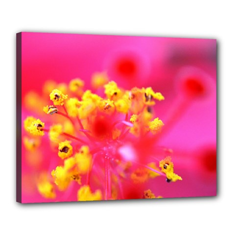 Bright Pink Hibiscus Canvas 20  X 16  by timelessartoncanvas