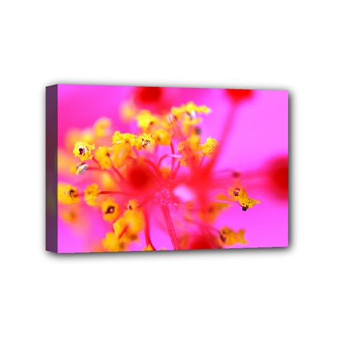 Bright Pink Hibiscus 2 Mini Canvas 6  X 4  by timelessartoncanvas