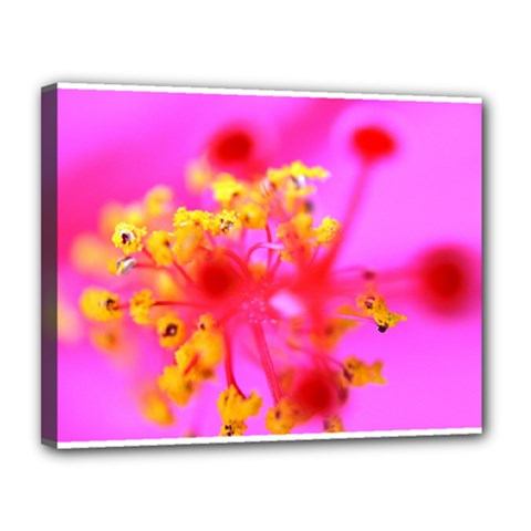 Bright Pink Hibiscus 2 Canvas 14  X 11  by timelessartoncanvas
