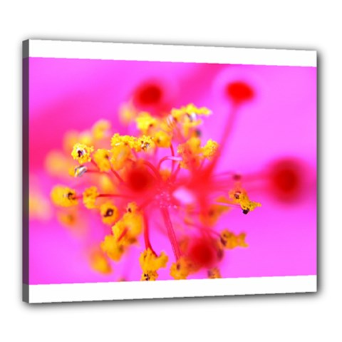 Bright Pink Hibiscus 2 Canvas 24  X 20  by timelessartoncanvas