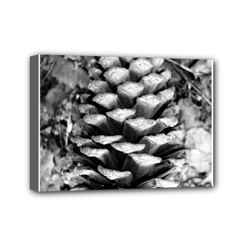 Pinecone Spiral Mini Canvas 7  X 5  by timelessartoncanvas