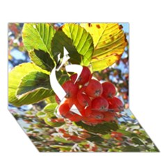 Rowan Ribbon 3d Greeting Card (7x5)