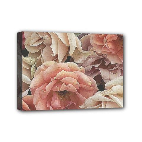 Great Garden Roses, Vintage Look  Mini Canvas 7  X 5