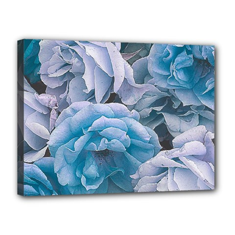 Great Garden Roses Blue Canvas 16  x 12  by MoreColorsinLife