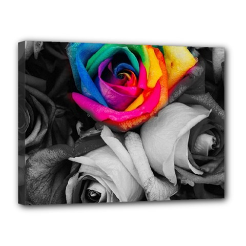 Blach,white Splash Roses Canvas 16  X 12  by MoreColorsinLife