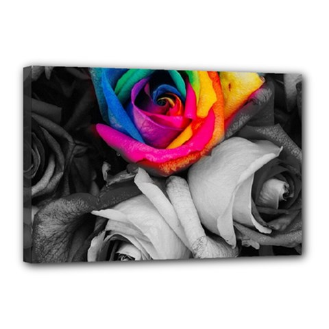Blach,white Splash Roses Canvas 18  X 12
