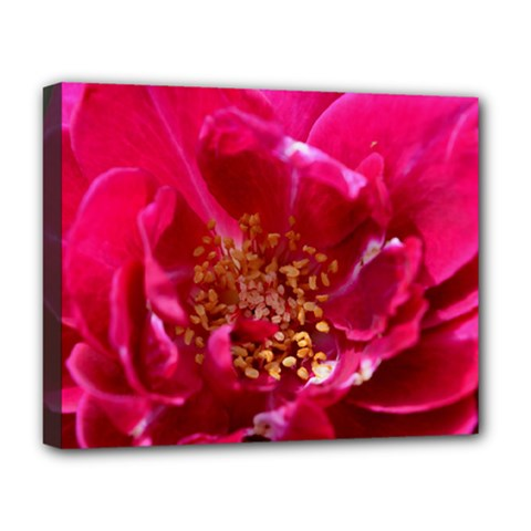 Red Rose Deluxe Canvas 20  X 16   by timelessartoncanvas