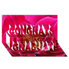 Red Rose Congrats Graduate 3d Greeting Card (8x4)  by timelessartoncanvas