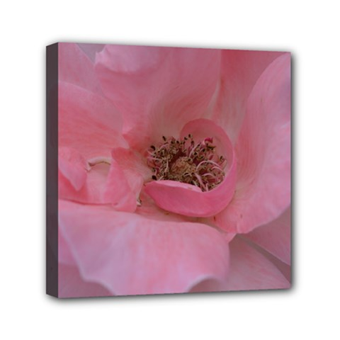 Pink Rose Mini Canvas 6  x 6