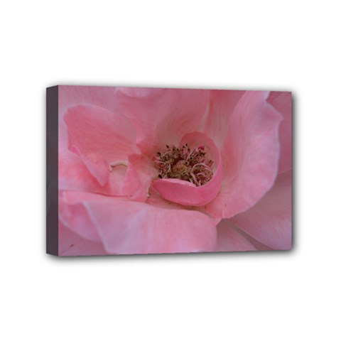 Pink Rose Mini Canvas 6  x 4