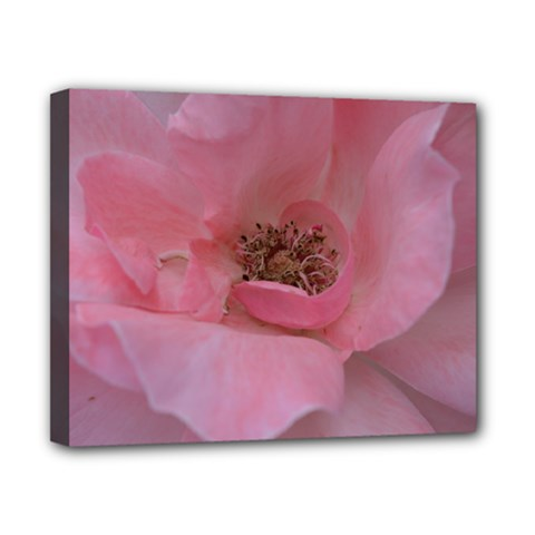 Pink Rose Canvas 10  x 8