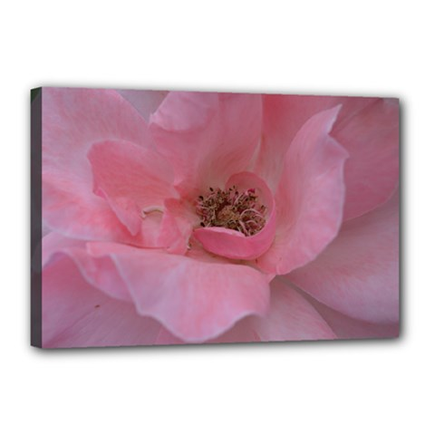 Pink Rose Canvas 18  x 12