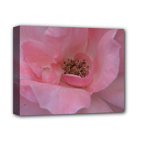Pink Rose Deluxe Canvas 14  x 11