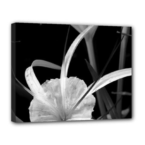 Exotic Black And White Flowers Canvas 14  X 11  by timelessartoncanvas