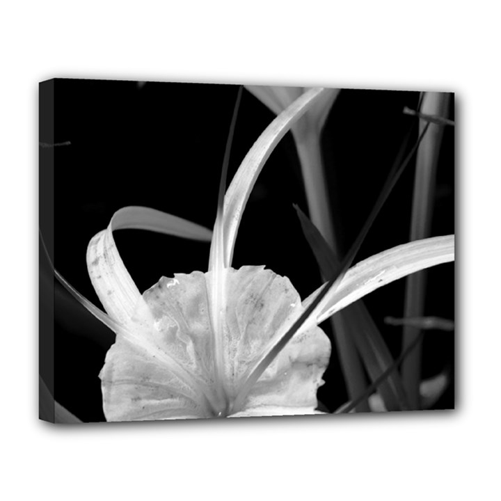 Exotic Black and White Flowers Canvas 14  x 11