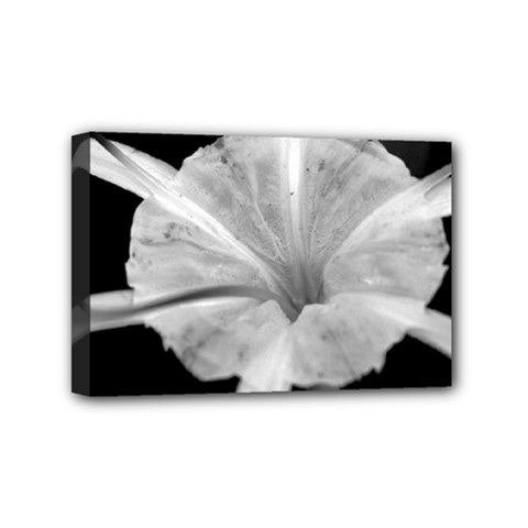 Exotic Black And White Flower 2 Mini Canvas 6  X 4  by timelessartoncanvas