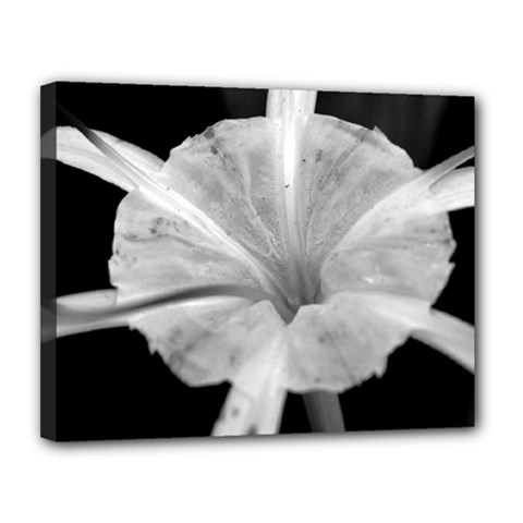 Exotic Black And White Flower 2 Canvas 14  X 11  by timelessartoncanvas