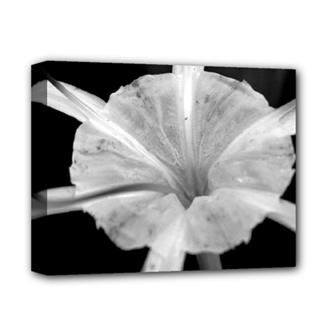 Exotic Black And White Flower 2 Deluxe Canvas 14  X 11  by timelessartoncanvas