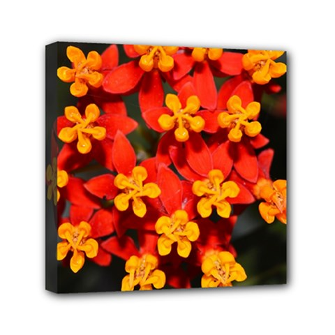 Orange And Red Weed Mini Canvas 6  X 6  by timelessartoncanvas