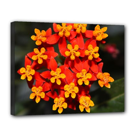 Orange And Red Weed Canvas 14  X 11  by timelessartoncanvas