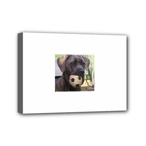 Cane Corso Mini Canvas 7  x 5  by TailWags