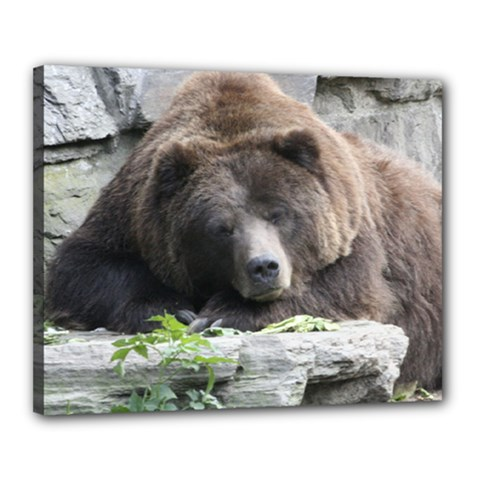Tired Bear Canvas 20  X 16  by MoreColorsinLife