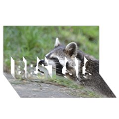 Racoon 1115 Best Sis 3d Greeting Card (8x4)