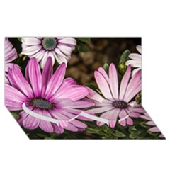 Beautiful Colourful African Daisies  Twin Heart Bottom 3d Greeting Card (8x4)  by OZMedia