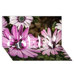Beautiful Colourful African Daisies  Sorry 3d Greeting Card (8x4)