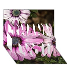 Beautiful Colourful African Daisies  Thank You 3d Greeting Card (7x5)  by OZMedia