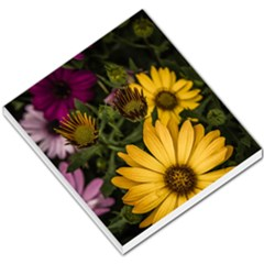 Beautiful Colourful African Daisies  Small Memo Pads