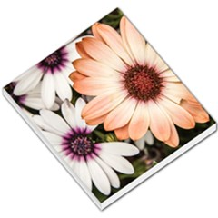 Beautiful Colourful African Daisies Small Memo Pads by OZMedia