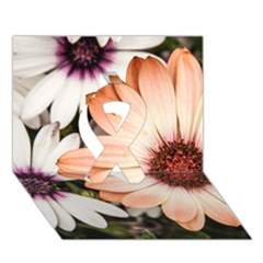 Beautiful Colourful African Daisies Ribbon 3d Greeting Card (7x5)  by OZMedia