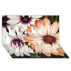 Beautiful Colourful African Daisies Best Wish 3d Greeting Card (8x4)  by OZMedia