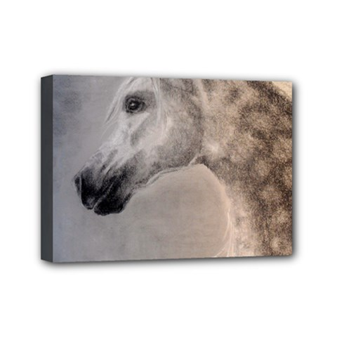 Grey Arabian Horse Mini Canvas 7  X 5  by TwoFriendsGallery