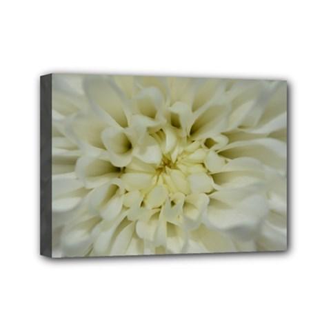 White Flowers Mini Canvas 7  x 5