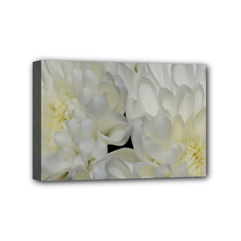 White Flowers 2 Mini Canvas 6  X 4  by timelessartoncanvas