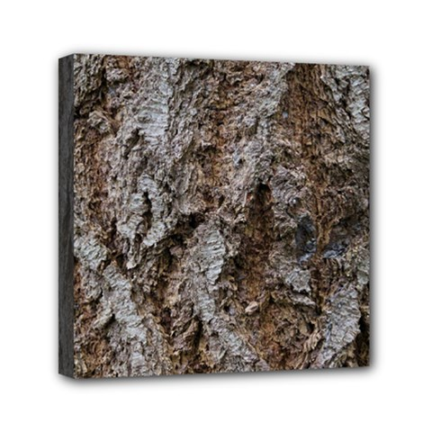 DOUGLAS FIR BARK Mini Canvas 6  x 6  by trendistuff