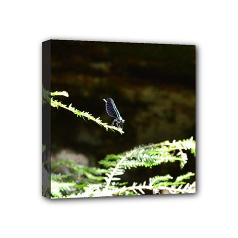 Nature s Stare Mini Canvas 4  X 4  by Naturesfinest