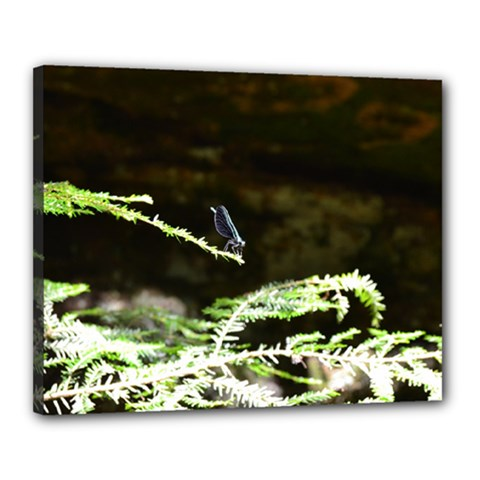 Nature s Stare Canvas 20  X 16  by Naturesfinest