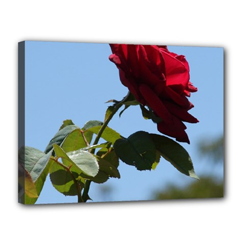 Red Rose 2 Canvas 16  X 12  by trendistuff