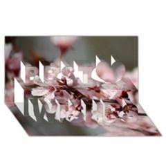 Plum Blossoms Best Wish 3d Greeting Card (8x4)  by trendistuff
