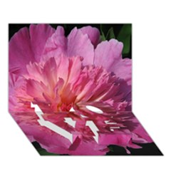 Paeonia Coral Love Bottom 3d Greeting Card (7x5)  by trendistuff
