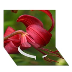 Lilium Red Velvet Circle Bottom 3d Greeting Card (7x5)  by trendistuff