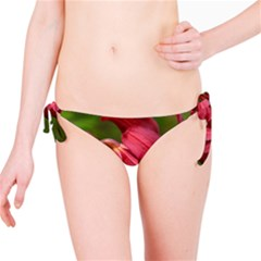 Lilium Red Velvet Bikini Bottoms by trendistuff
