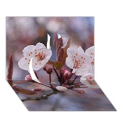 Cherry Blossoms Apple 3d Greeting Card (7x5)  by trendistuff