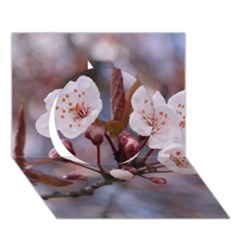 Cherry Blossoms Circle 3d Greeting Card (7x5)  by trendistuff